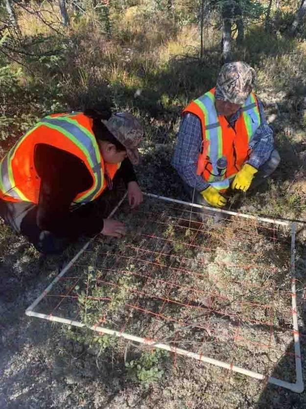 Tłı̨chǫ Highway Monitors Jody Zoe and Albert Nitsiza conducting the vegetation grid survey at plot T2WD50P1.